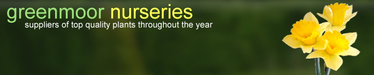 Welcome to Greenmoor Nurseries - suppliers of top quality plants throughout the year