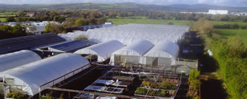Greenmoor Nurseries